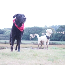 Large dog £13.50 per day