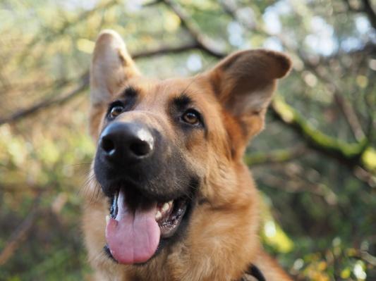 Large Dog £12.95