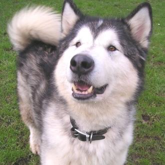 Extra large Dog £15.00 per day
