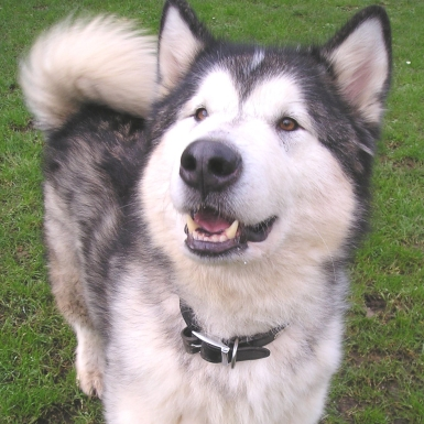Extra large Dog £14.50 per day