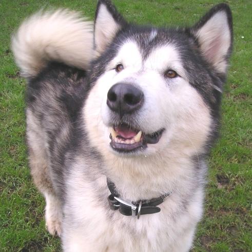 Extra large Dog £14.45 per day